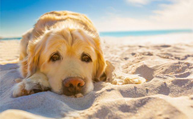 Najbolj vroč del dneva je med 11. in 15. uro, a pri psih veljajo drugačna pravila. FOTO: Shutterstock