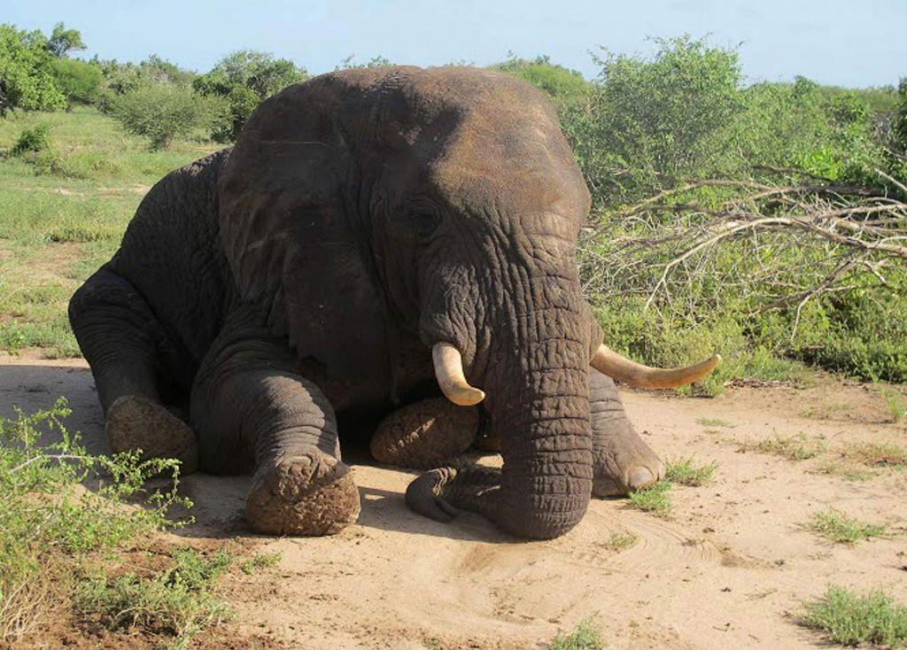 V parku divji lovci v enem letu niso ubili niti enega slona