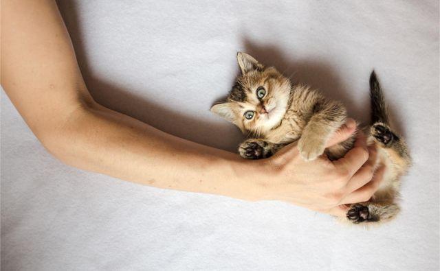 Mačke veljajo za bitja, ki razmišljajo s svojo glavo, imajo izredno močno voljo in se včasih vedejo nenavadno. FOTO: Shutterstock