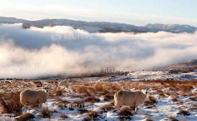 Včasih se oblaki na gori spustijo čisto nizko in objamejo ljudi in živali. Foto Reuters