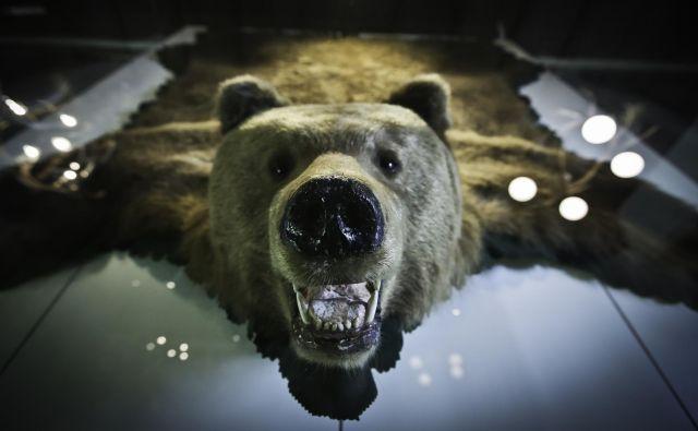 Zanimivejša plat medvedje zgodbe je polarizacija njenih protagonistov. Mestni živelj »naravo« predvsem uživa, podeželje ji gospodari. FOTO:Jože Suhadolnik