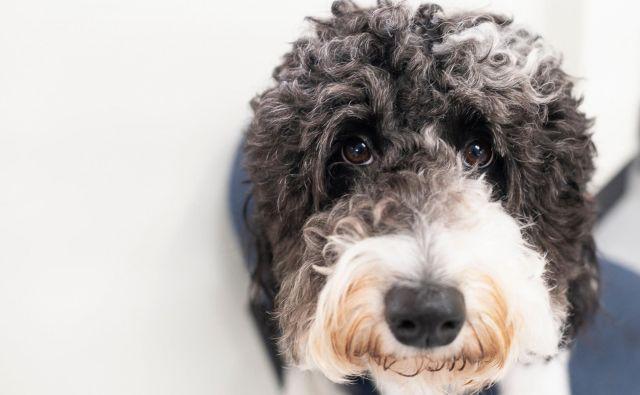 Lastniki psov ta pogled še kk odobro poznajo. FOTO: Johannes Eisele/AFP