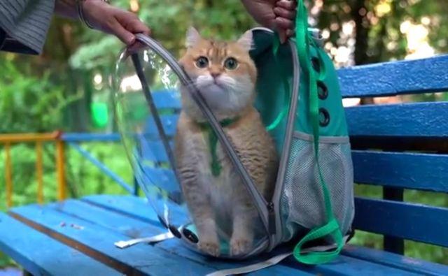Ali vaša mačka rada hodi z vami na sprehode in potovanja? FOTO: Youtube