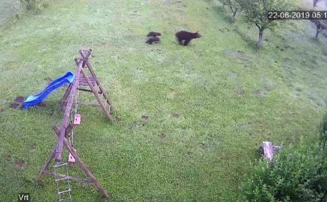 Kosmatinci so si naredili medvedjo uslugo s tem TV nastopom. Foto Zajem Zaslona