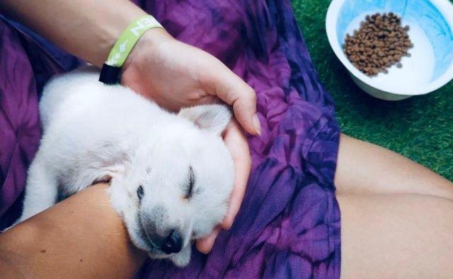 Lastnik hotela in hostla Daniel Silva se je za terapijo polno pasjih poljubčkov odločil, ker je velik ljubitelj štirinožnih kosmatincev. FOTO: Facebook Puri Garden Hotel & Hostel