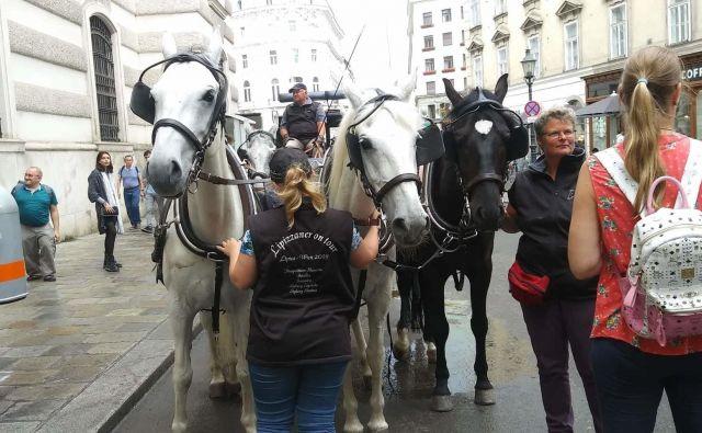 Družina Matern je z lipicanci prispela na na Dunaj. FOTO: Družina Matern