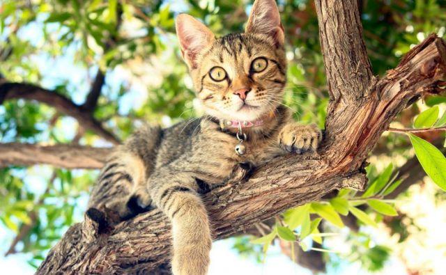 Mačke so po naravi izredno radovedne in rade raziskujejo svojo okolico. FOTO: Shutterstock