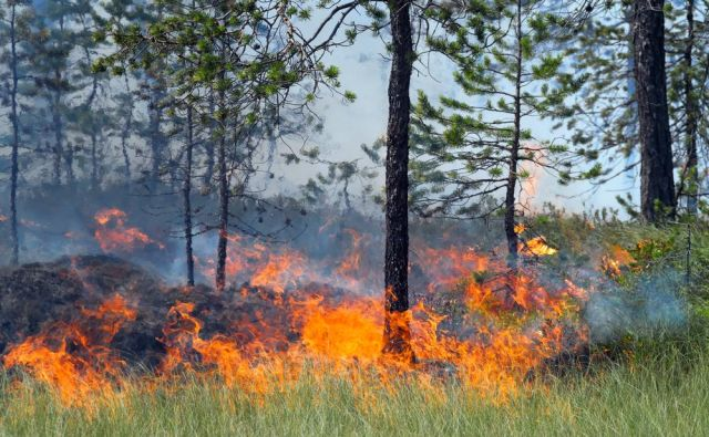 Nevarnost požarov Foto Shutterstock