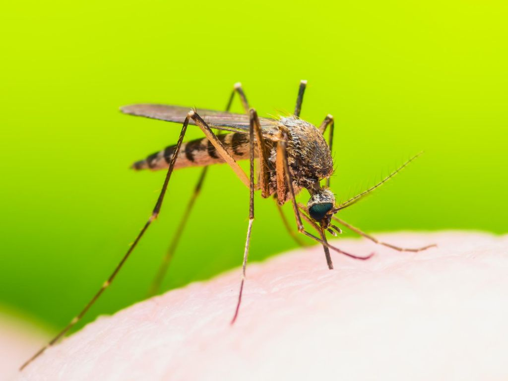 FOTO:Komarji so se razmnožili, grizejo dan in noč