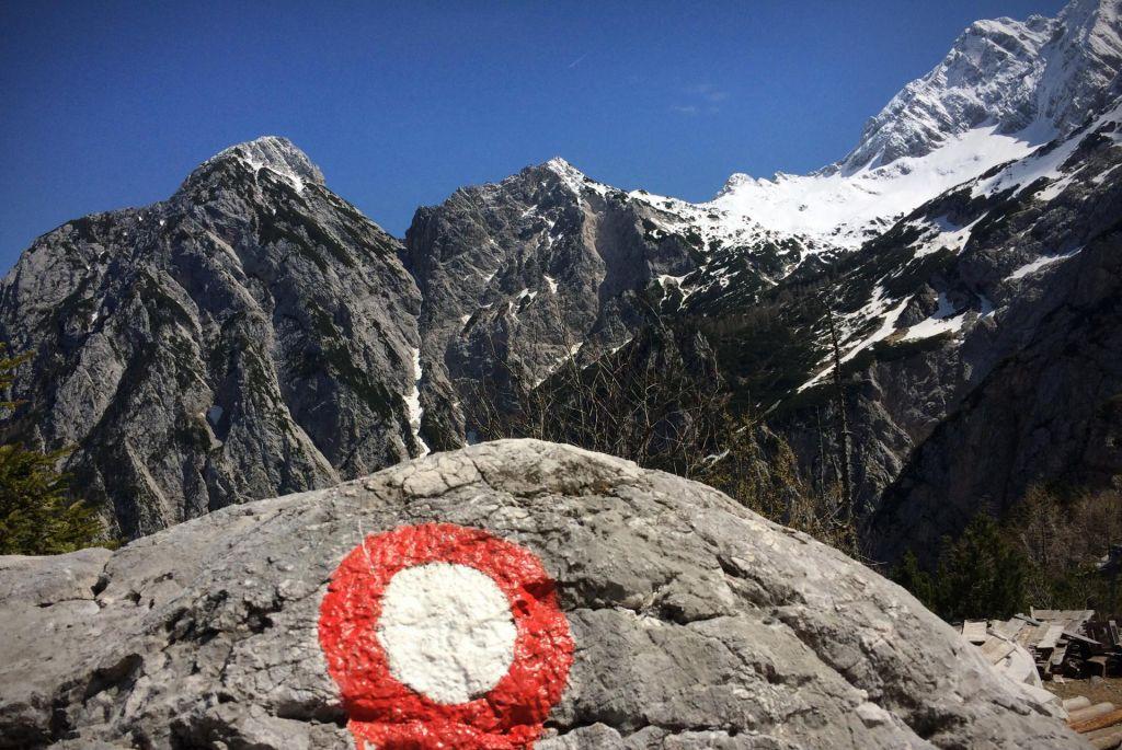 FOTO:Tiha rdeče-bela spremljevalka planincev, ki nikoli ne zataji