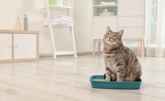 Zakaj mačka noče urinirati v svojem stranišču? Foto: Shutterstock