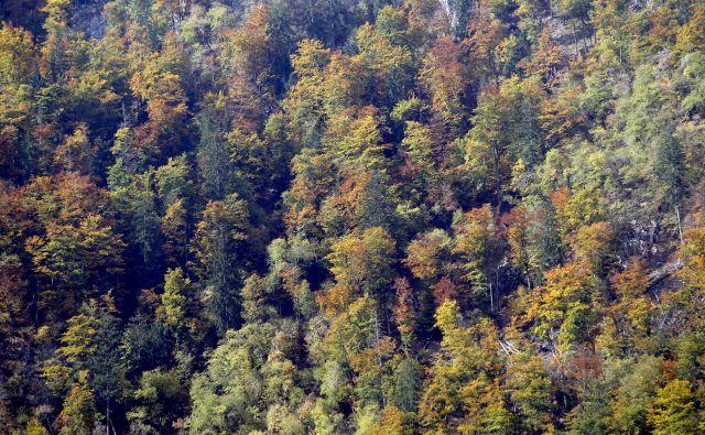 Drevesa so naši naravni zavezniki pri ohranjanju zdravega okolja. FOTO: Roman Šipić/Delo