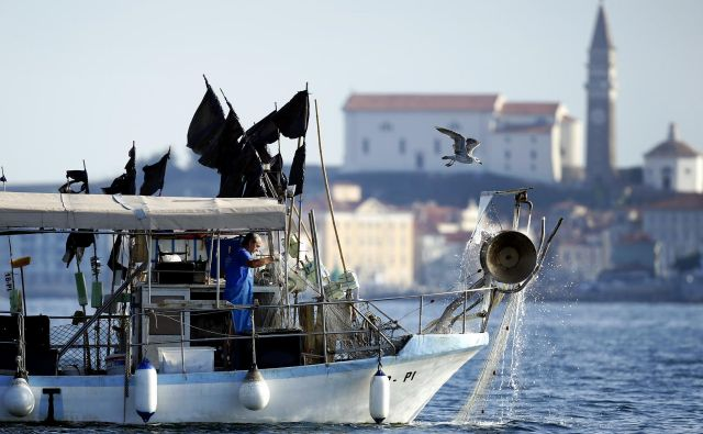 Slovenski ribiči imajo 44 kvadratnih kilometrov morja manj, saj jih hrvaška policija nenehno ovira pri delu. FOTO:Matej Družnik/Delo