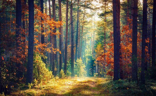 Gozd Foto: Shutterstock