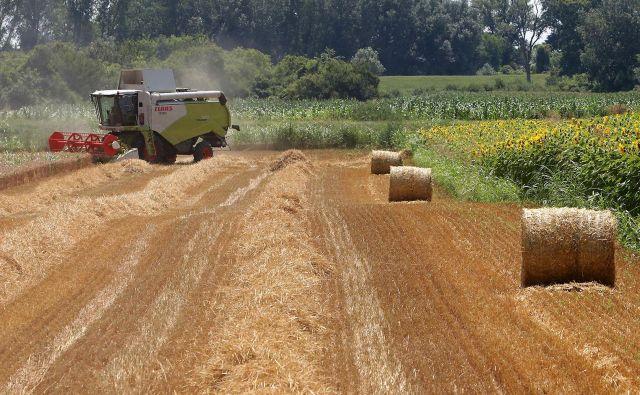 Kmetijstvo ima v Srbiji pomemben delež v BDP, zato je usepeh žetve pomembno vprašanje. Foto: Nenad Pavlovic/Blic