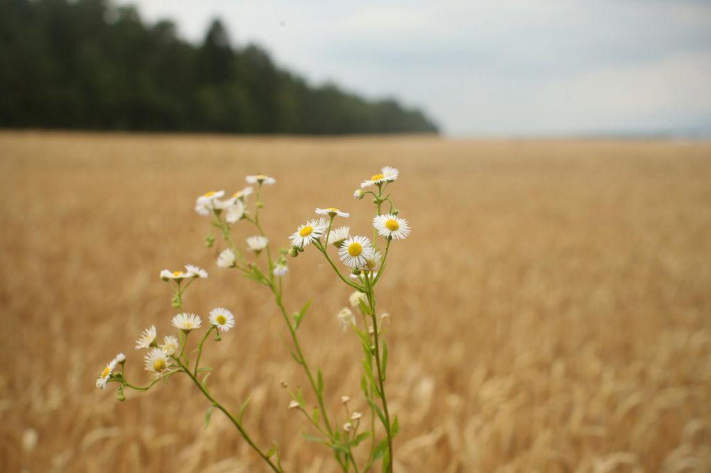 Slovenski živilci še daleč od trajnosti
