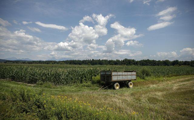 nikjer ob ograji črpališč mestnega vodovoda nisem opazil polj, na katerih raste koruza, sem pa videl cesto brez urejene kanalizacije. Foto Uroš Hočevar