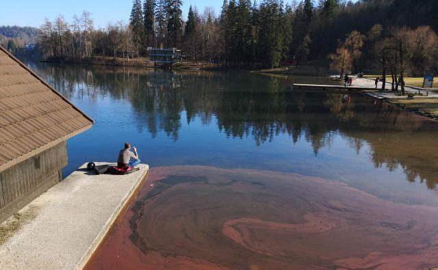 Vabljeni strokovnjaki so pravilno ugotovili, da se stanje Blejskega jezera slabša, strokovni dokazi krivde za onesnaženje pa so bili izredno borni. Foto Dejan Javornik