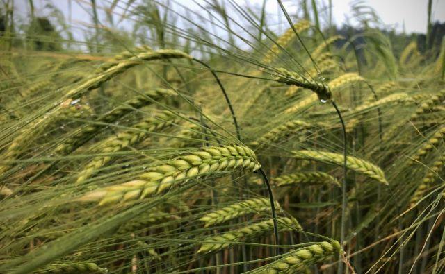 Kmetijska politika bi morala podpreti male družinske kmetije, trdijo v sindikatu kmetov. FOTO:Jure Eržen/Delo