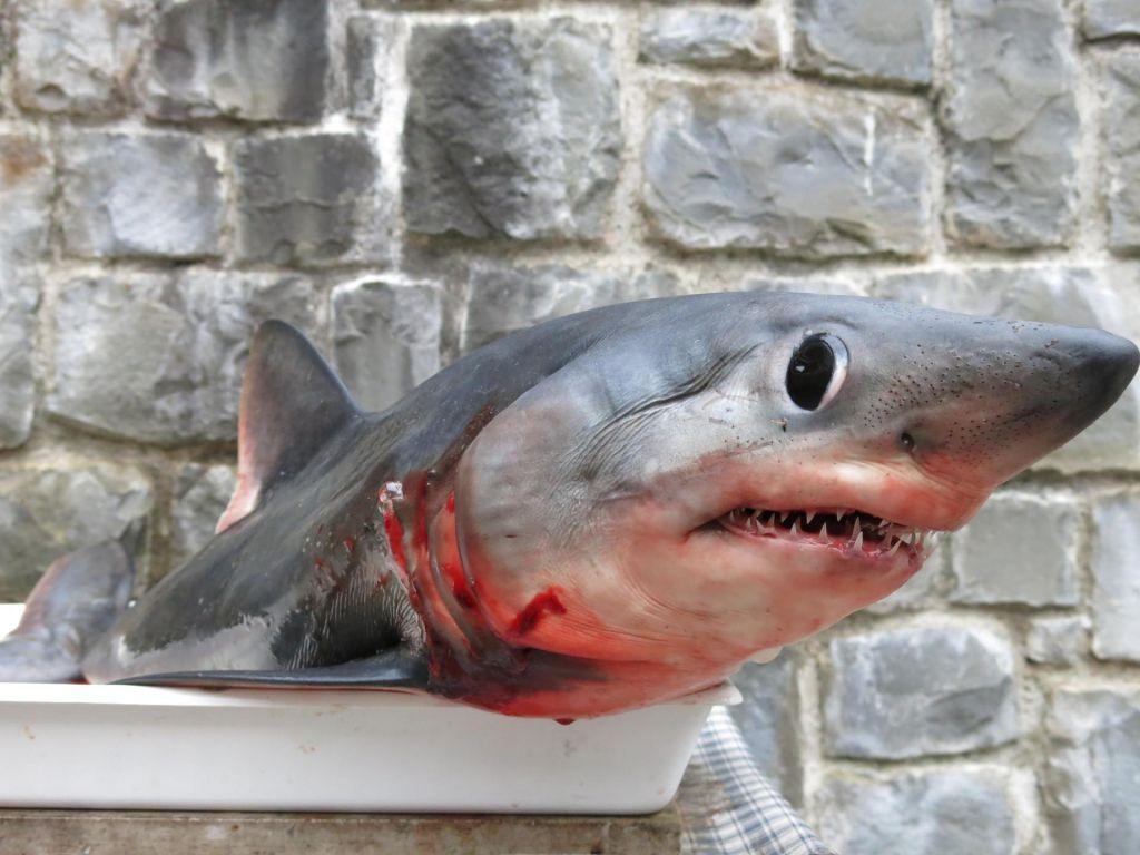 Morski psi v Sredozemskem morju izumirajo
