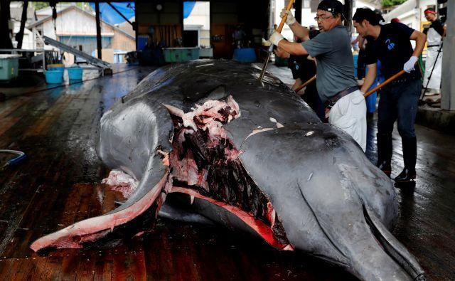 Razkosanje ulovljenega kljunastega kita v japonskem pristanišču Wads, jugovzhodno od Tokia.Japonci so po več kot 30 letih ponovno začeli komercialno loviti kite, čeprav so se apetiti prebivalcev po kitovem mesu v zadnjih desetletjih močno zmanjšali. FOTO: Kim Kyung-hoon/REUTERS