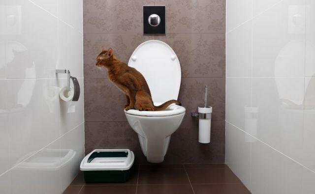 Postopek učenja mačke, da začne uporabljati vaše stranišče, je preprost, a traja nekaj časa. FOTO: Shutterstock