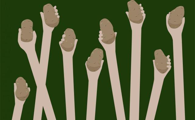 Krompir je ena ključnih kultur na svetu, krompirjev virus Y pa je med najbolj razširjenimi rastlinskimi virusi in poleg glavne tarče – krompirja napada tudi druge rastline. Med drugim je kriv za skoraj popolno izumrtje sorte igor. Foto Shutterstock