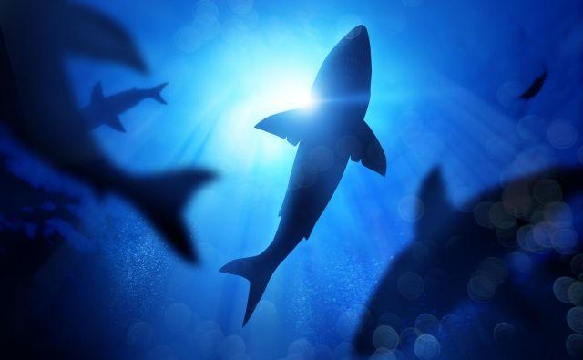 Morski pes Foto Shutterstock
