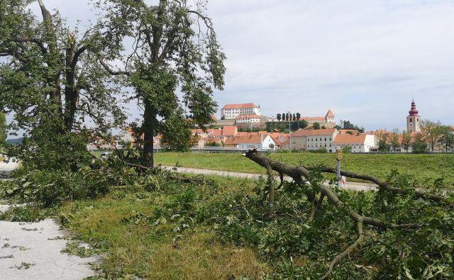 Neurje je pred kratkim pustošilo na Ptuju. FOTO: Maribor Info