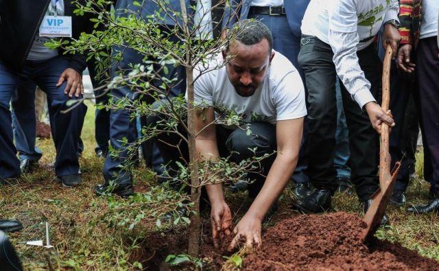 Pogozdovanje je del iniciative Zelena zapuščina predsednika vlade Abija Ahmeda. FOTO: Twitter kabineta etiopskega predsednika vlade