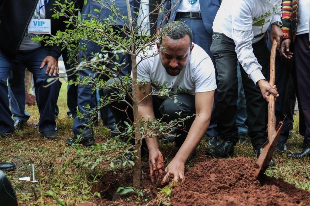 V Etiopiji v enem dnevu posadili več kot 353 milijonov dreves
