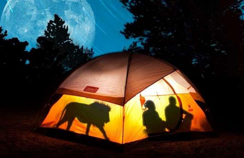 FOTO:Bi pustili otroku preživeti noč v šotoru sredi živalskega vrta?