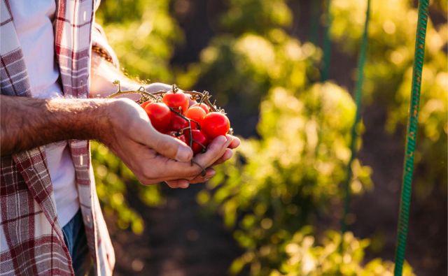 Biodinamični setveni koledar Marije Thun za mesec avgust vas že čaka na spletni strani deloindom.si. FOTO: Shutterstock