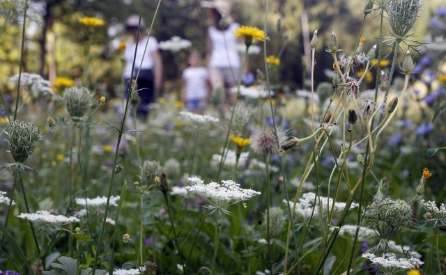 Ekstenzivni travniki izginjajo zaradi intenziviranja, preoravanja in opuščanja rabe. FOTO: Mavric Pivk