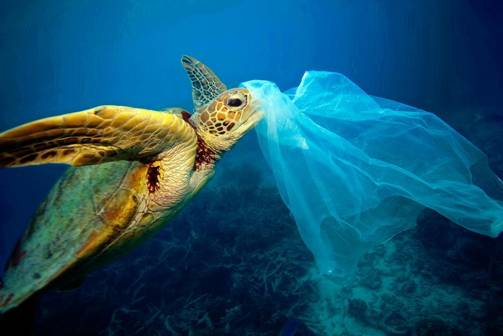 FOTO:Morje plastike