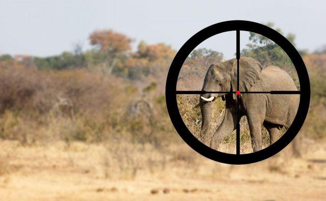 Lovci v Afriki so med letoma 2012 in 2014 porabili skupaj 326,5 milijona ameriških dolarjev. Foto: Shutterstock