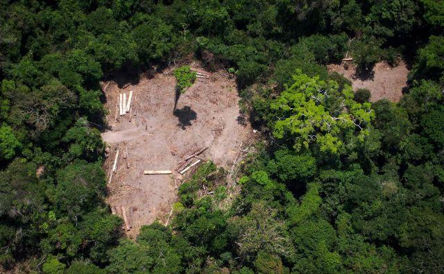 Brazilski predsednik Jair Bolsonaro je satelitske podatke o izsekavanju pragozda označil za laži. FOTO: Raphael Alves/AFP