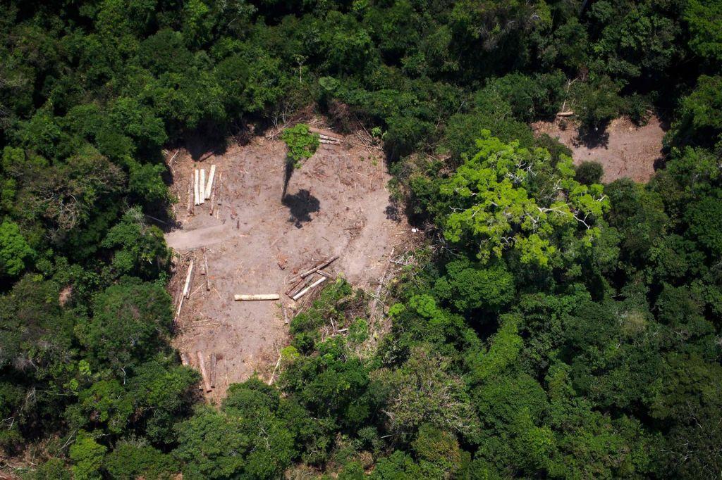 Krčenje amazonskega pragozda se je na letni ravni povečalo za 40 odstotkov
