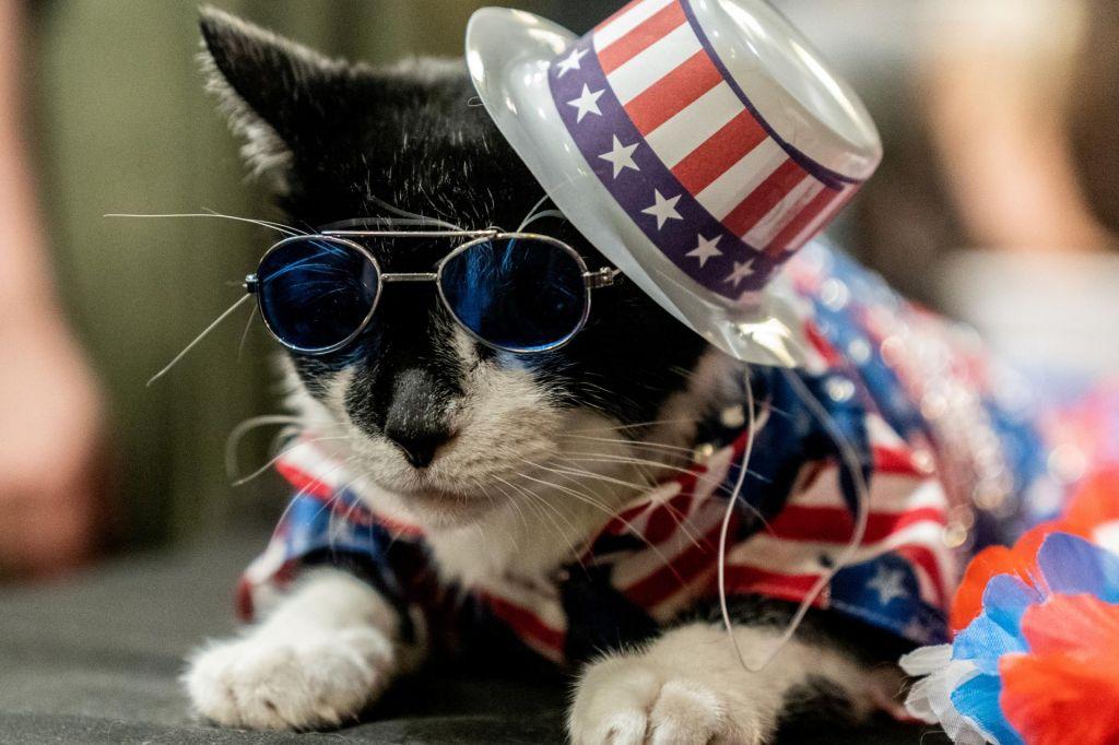FOTO:Moda za mačke