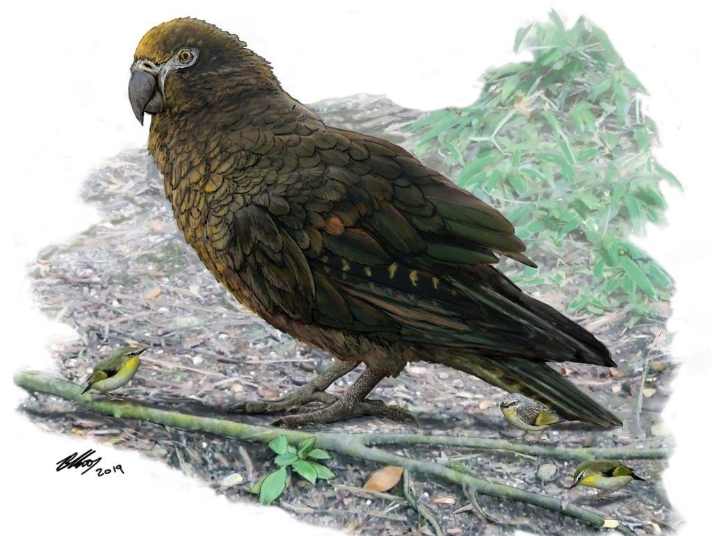 Papagaj večji od bernardinca
