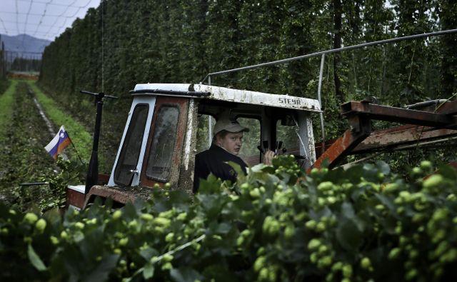 Hmeljarji morajo pri uporabi pesticidov v hmeljiščih upoštevati predpise, nabor pesticidov pa se še zmanjša zaradi zahtev kupcev iz tujine, kamor izvozimo 90 odstotkov hmelja.<br /> FOTO: Jože Suhadolnik