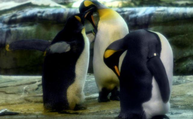 Ping in Skipper sta te dni še posebej ljubeča. FOTO: Annegret Hilse/Reuters