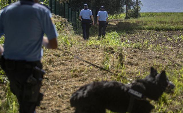 Službeni psi so pomembni tako pri iskanju in sledenju kot tudi med postopkom zajetja. FOTO: Voranc Vogel