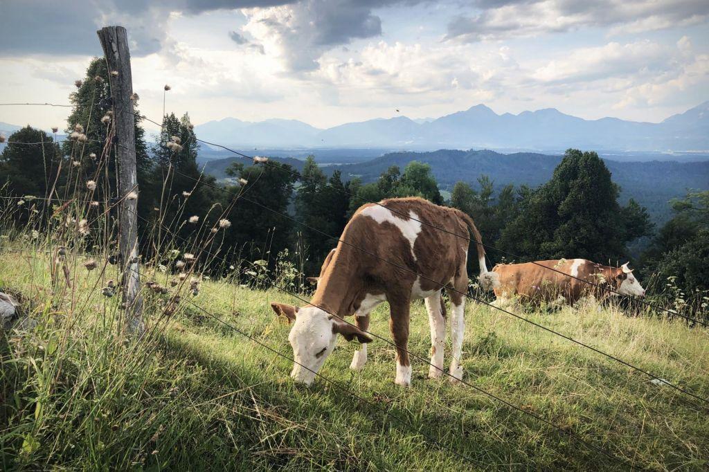 FOTO:Kmetijstvo ima ključ za ustavitev podnebnih sprememb