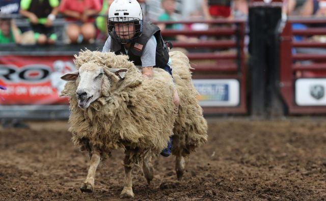 V mestu Des Moinesu v ameriški zvezni državi Iowa poteka tradicionalni sejem, ki je bil prvič organiziran leta 1854. V povprečju sejem vsako leto obišče več kot milijon obiskovalcev. Eden bolj nenavadnih dogodkov na sejmu je volnena dirka (Wool Riders Only Mutton Bustin competition). FOTO: Chip Somodevilla/AFP
