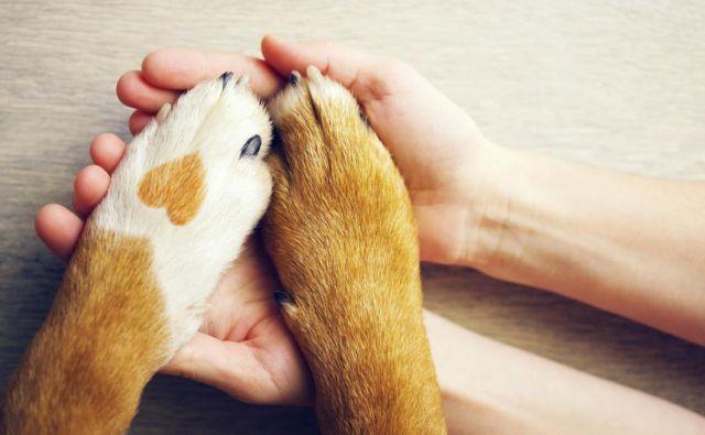 Komunikacija s težavnimi strankami je v veterini nujna veščina. Foto: Shutterstock