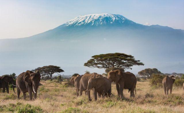 Sloni in v ozadju Kilimandžaro: razgled v Amboseliju, ki ga zlepa ne pozabiš. Foto Shutterstock