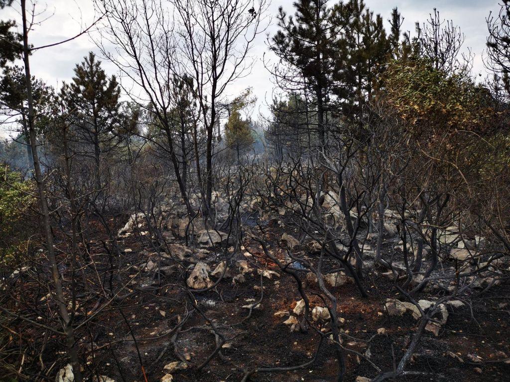 FOTO:Požar na Cerju še ni pod nadzorom, gasilcem težavo dela burja
