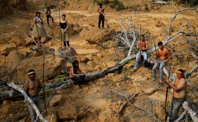 Domorodni prebivalci brazilskega plemena Mura prikazujejo posekano območje znotraj amazonskega pragozda v bližini Humaite, ki ga z dobvoljenjem brazilskega predsednika Bolsonara živinorejci zažigajo, da bi dobili čim več pašnih površin, na katerih bi vzrejali živino. FOTO: Ueslei Marcelino/REUTERS