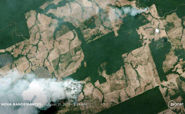 Tropski pragozd, eden od najpomembnejših ekosistemov na Zemlji, se pospešeno krči. Foto:Afp